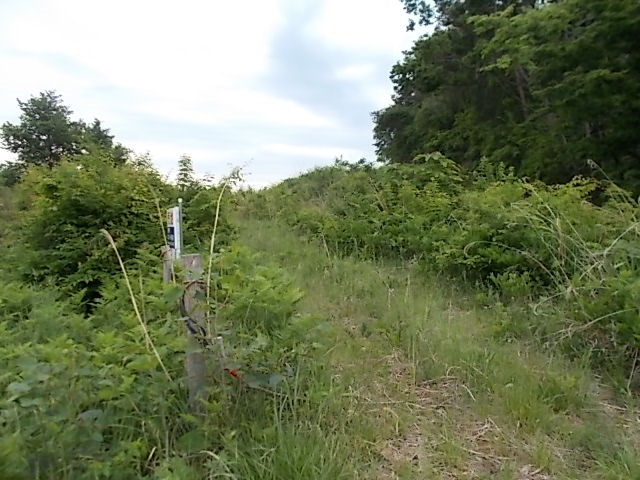 高松第29地割 山林 その他