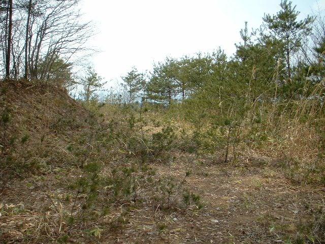 高松第12地割 山林 外観
